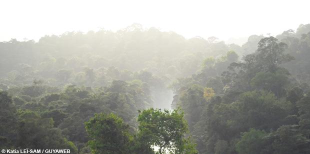 +1° de réchauffement climatique : quelles conséquences sur les écosystèmes forestiers guyanais ?