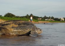 Greenpeace en mission scientifique sur les tortues