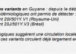 Hausse du nombre de cas de variants préoccupants en Guyane : 63 au jeudi 24 mars dont 22 cas de VOC britannique et 41 de VOC P1 brésilien !