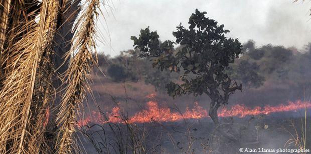 L'Amazonie brûle, Bolsonaro sous le feu des critiques