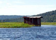 Kaw-Roura et l'Amana, ces réserves naturelles qui boitent